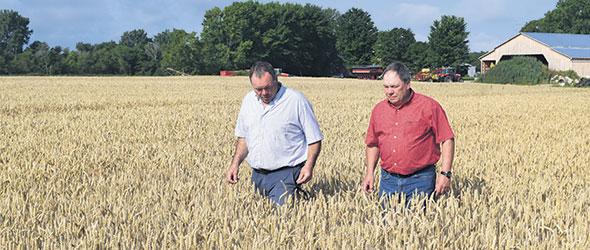 L'ajout de céréales d'automne et de printemps dans leurs rotations est un changement majeur  pour Sylvain et André Pion.