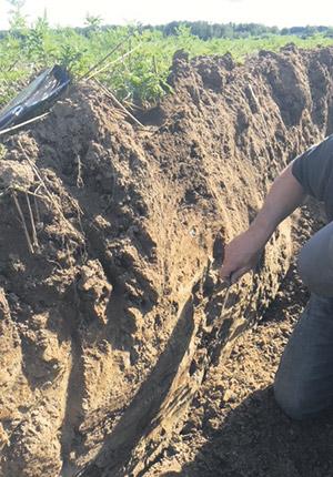 Plusieurs profils de sol ont été réalisés en 2020 afin de cartographier un champ à microéchelle, ce qui permet d'approfondir les connaissances de la ferme. Photo : Gracieuseté de Caroline Sévigny