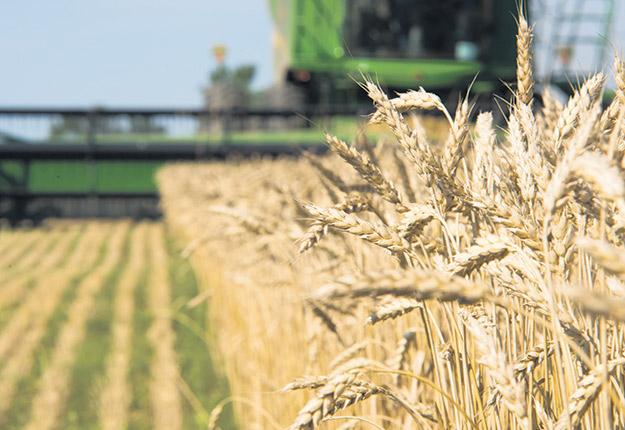 Le marché est stable dans le grain biologique, mais est à la hausse dans le conventionnel. Photo : Martin Ménard / Archives TCN
