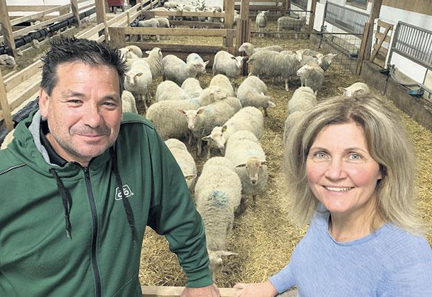 Les producteurs ovins Christian Beaudry et Marie-France Bouffard produisent en moyenne 2 000 agneaux par année, dont 85 % sont destinés au marché de l'agneau lourd. Photo : Gracieuseté de la Ferme Agronovie