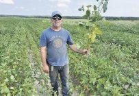 Le producteur Pierre Gauthier souligne que la commercialisation des grains bio se fait sans intermédiaires. Photo : Gracieuseté de Pierre Gauthier