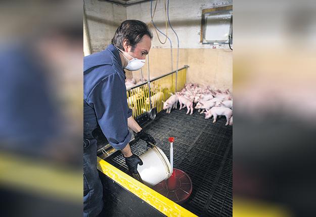 Un nouvel outil de calcul « sur mesure» est en préparation pour aider les éleveurs à mieux évaluer le coût de production complet du porcelet ou du porc. Photo : MarieMichèle Trudeau/Archives TCN