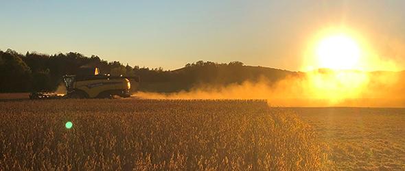 Chez les Pittet, en Mauricie, la récolte a commencé une semaine à l'avance. Crédit : Katrine Dion Sinotte