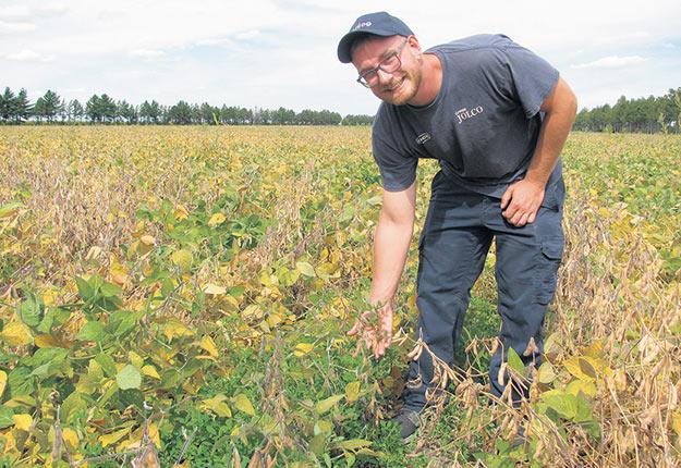 William Overbeek inspecte la progression des semis sur sa parcelle expérimentale de Sainte-Madeleine. Sur la photo, un plan de mélilot, semé par drone au printemps. Photo : Claude Fortin