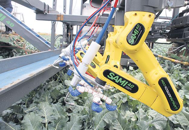 Avec ses mains robotisées, le SAMI 4.0 peut empoigner les brocolis par le haut et les mettre sur un convoyeur. Il peut récolter à une vitesse de 300 mètres à l'heure. Photos : Caroline Morneau/TCN