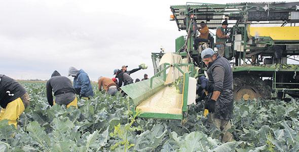 Les Jardins Paul Cousineau et Fils embauchent 150 travailleurs étrangers chaque année, ce qui représente 30 % de leurs coûts de production.