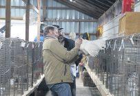Des juges de l'American Poultry Association évaluant un oiseau de fantaisie le 2 octobre dans le cadre du Festival des saveurs d'automne d'Ormstown. Photos : Patricia Blackburn/TCN