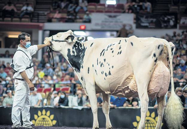 La vache Shakira, copropriété de la Ferme Jacobs située dans Portneuf, a été sacrée grande championne suprême de la World Dairy Expo de Madison, au Wisconsin. Photo : Gracieuseté de la Ferme Jacobs