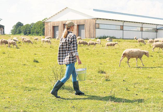 Dans son rapport annuel, la Financière agricole mentionne avoir atteint un record du nombre de jeunes entrepreneurs soutenus, soit 536. Photo : Shutterstock